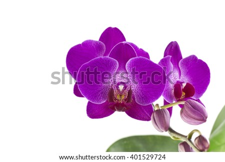 Purple orchid flower belonging to the Orchidaceae, a diverse and widespread family of flowering plants - stock photo