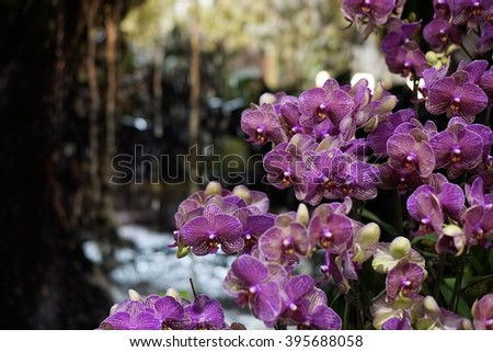 purple orchid flower blossom against waterfall background - soft focus and select focus - stock photo