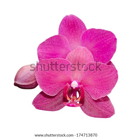 Purple orchid flower with bud isolated on white - stock photo