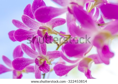 purple orchid flowers over sky background