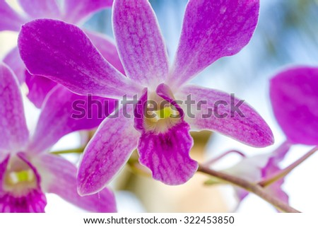 purple orchid flowers over sky background - stock photo
