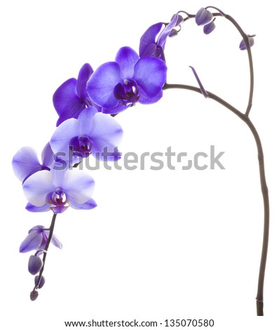 Purple Orchid Framing a White Background - stock photo