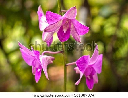 purple orchid in a garden background - stock photo
