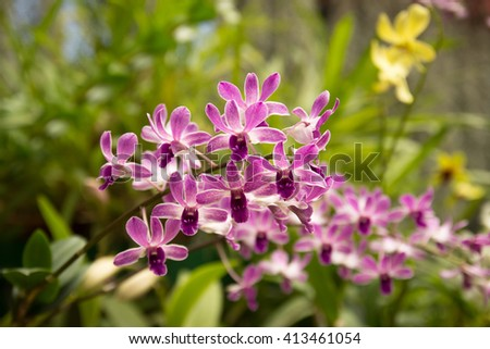 Purple orchid in bloom. Orchids in greenhouse. Blurred background. Growing orchids. Orchids care - stock photo