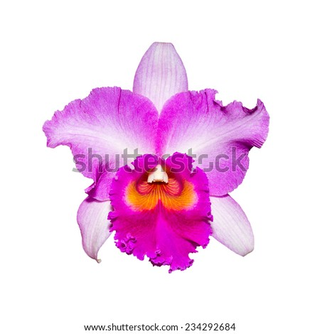 purple orchid isolated on white background with clipping path  - stock photo