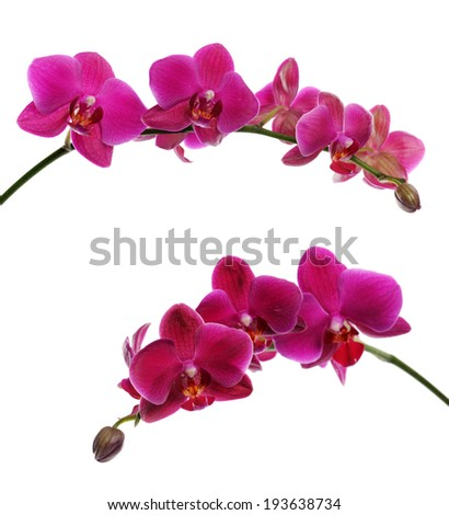 purple orchid on black - stock photo