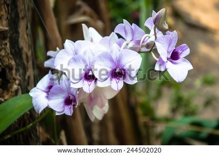 purple orchid on tree,Thailand - stock photo