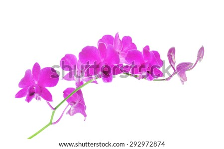 Purple orchid on white background. - stock photo