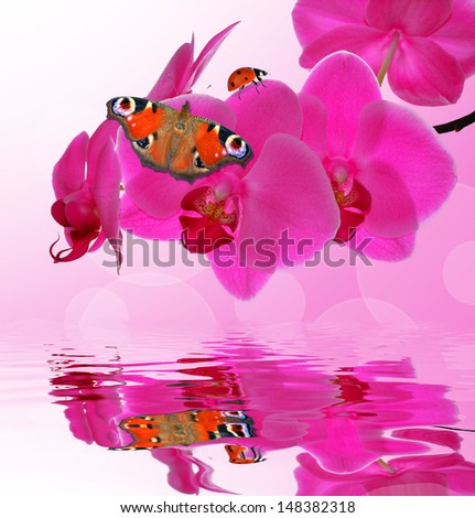 Purple orchid with butterfly and ladybug - close up with shallow DOF  - stock photo