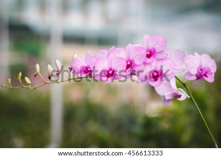 Purple Orchids flower