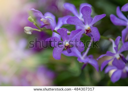 Purple orchids flower nature background