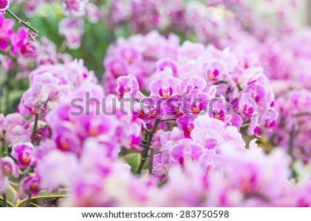 purple orchids in the garden - stock photo
