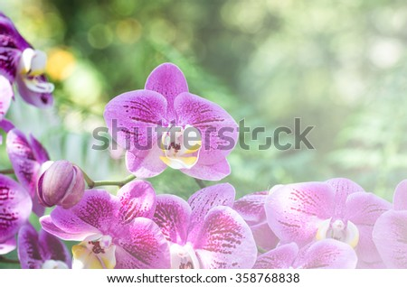 purple orchids in the garden,beautiful purple orchid