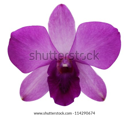 Purple orchids on a white background. - stock photo