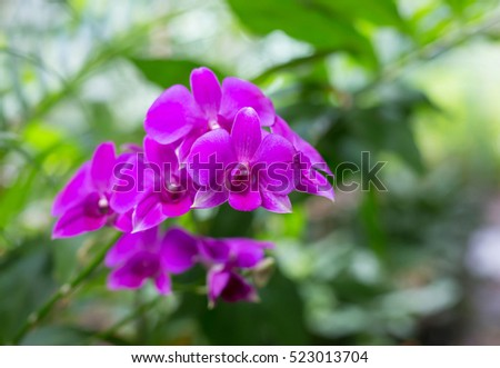 Purple orchids, Violet orchids. Orchids Is considered the queen of flowers in Thailand