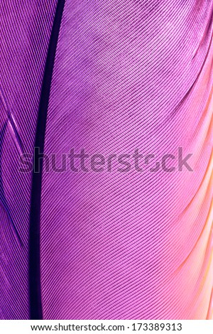 "purple pen feather close up, ""Radiant Orchid"" is the color of the Year 2014"