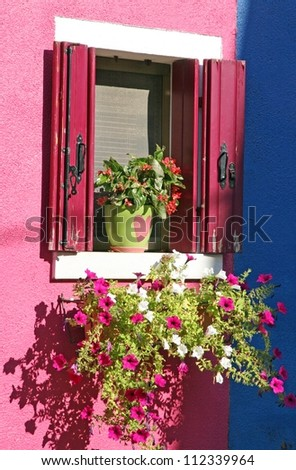 purple petunias in the colourful House of the island of Burano Venice - stock photo