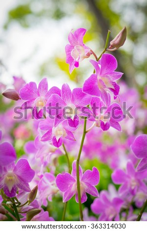 Purple pink orchid in a Garden - stock photo