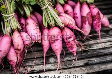 Purple Plum Radish Vegetables in Mountain - stock photo