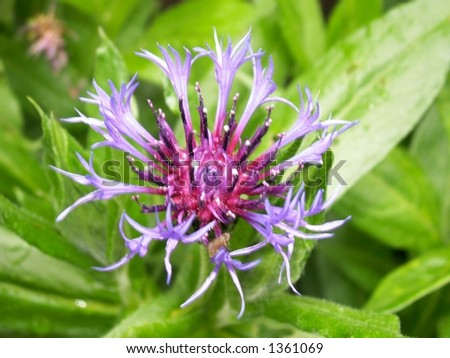 Purple Pointy Flower