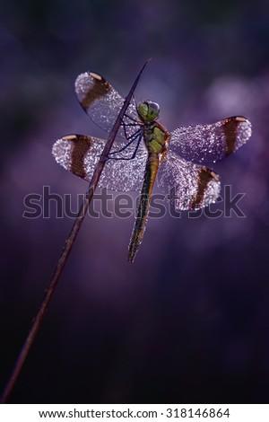 Purple Rain - stock photo