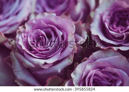 Purple rose flower bouquet vintage background, close up of wedding bouquet - stock photo