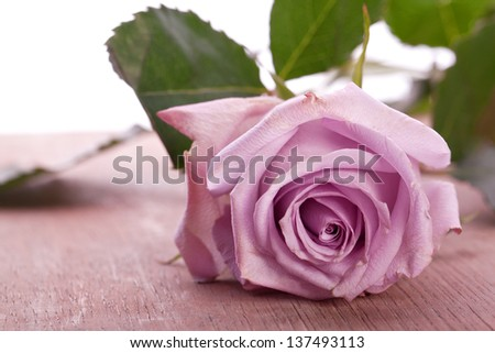 purple rose for wedding,  love and valentines day