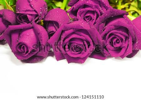 stock-photo-purple-ros...