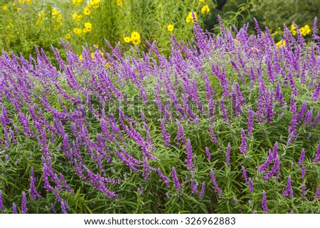 Perennial Garden Stock Images Royalty Free Images