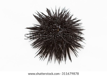 Purple sea urchin from Adritic sea, isolated on white background. - stock photo