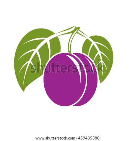 Purple simple plum with green leaves, ripe sweet fruits illustration. Healthy and organic food, harvest season symbol.  - stock photo