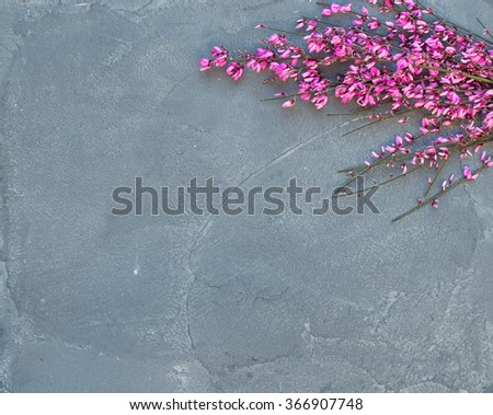 Purple spring blooming tree branch on a grey concrete stone background, top view, copy space - stock photo