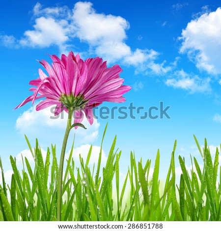 Purple spring flower with green grass on blue sky - stock photo