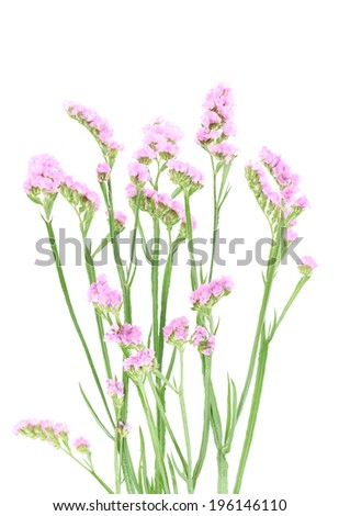 purple statice flowers isolated on white background.