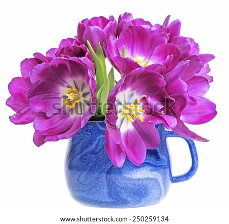 purple tulips in a blue cap - stock photo