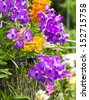 Purple Vanda orchid (Vanda Coerulea Orchid ) in garden - stock photo
