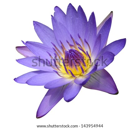 Purple waterlily on white background with clipping path - stock photo