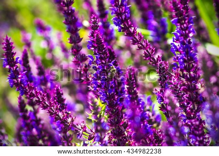 purple wildflowers in the meadow on a sunny day - stock photo