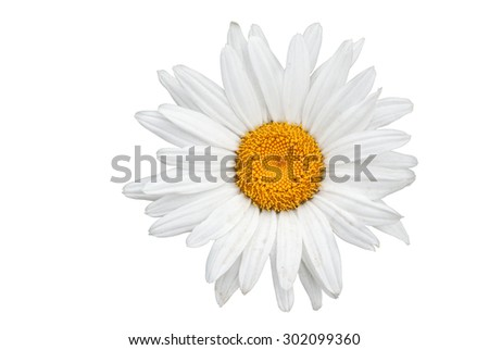 Purple zinnia flower closeup with soft focus background