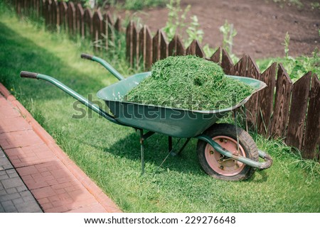 pushcart full of cutted grass  - stock photo