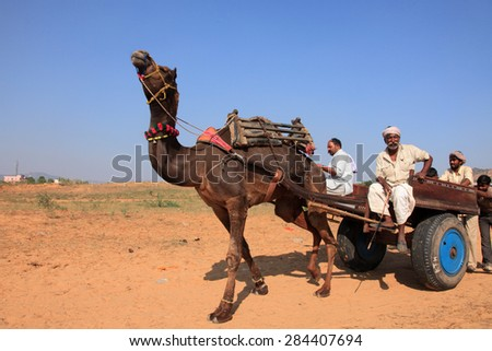 PUSHKAR, INDIA - NOV 19: An unidentified villager with his camel participate in Pushkar Fair on November 19, 2010 in Pushkar, India. Camels are the top selling livestock in the Pushkar Fair.