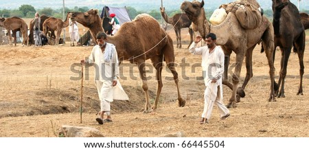 PUSHKAR, INDIA - NOVEMBER 18: Camel traders at the Pushkar Camel Fair on November 18, 2010. The fair is held annually in Pushkar, Rajasthan to buy and sell camels for commercial purposes.