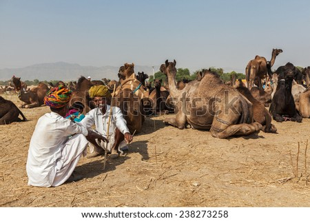PUSHKAR, INDIA - NOVEMBER 21, 2012: Indian men and camels at Pushkar camel fair (Pushkar Mela) - annual five-day camel and livestock fair, one of the world's largest camel fairs and tourist attraction - stock photo