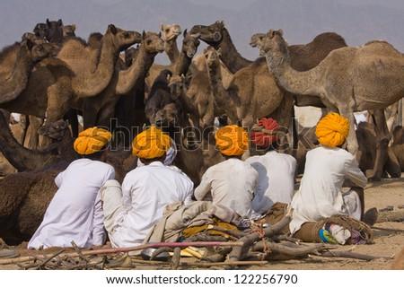 PUSHKAR, INDIA - NOVEMBER 20: Pushkar Camel Mela (Pushkar Camel Fair) on November 20, 2012 in Pushkar, Rajasthan, India. This fair is the largest camel trading fair in the world. - stock photo