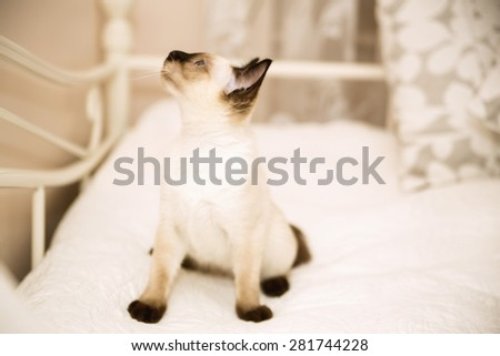 Puss on the bed looking with interest - stock photo