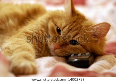 Pussy cat watch TV - stock photo