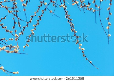 Pussy willow branches with white catkins on a blue sky background. Shallow DOF photo with retro tonal correction, retro style filter - stock photo