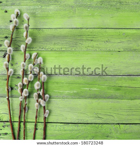 pussy willow twigs on wood background - stock photo