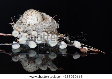 Pussy willows and a cowbird egg in a small nest on a reflective black surface - stock photo