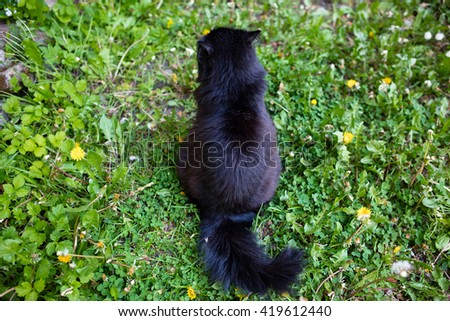 Pussycat outdoor. Sitting on the grass - stock photo